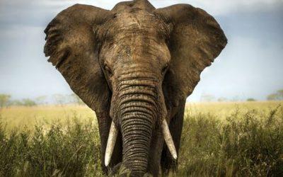El Cuento del Elefante
